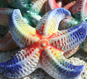 Barbados Red Clay Pottery Starfish - Choice of Colors